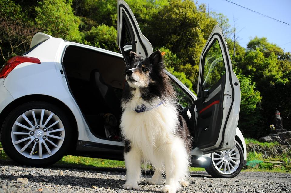 dog friendly car rental, dog in rental car