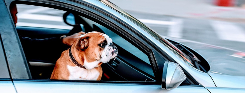 Dog Friendly Car Rental is possible!